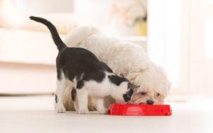 Darf Der Vermieter Katzen In Der Mietwohnung Verbieten